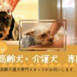 高齢犬・介護犬専門 出張トリミング ご自宅へお伺い致します!