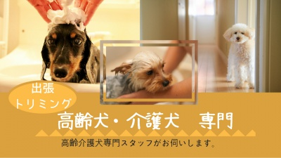 高齢犬・老犬出張トリミング 老犬シャンプー 老犬カット 老犬トリミング 高齢犬トリミング 老犬トリミング