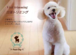 高齢犬・老犬出張トリミングのpeachdog 老犬シャンプー 老犬カット 老犬トリミング