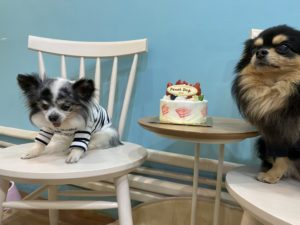 トリミングサロン開店祝いケーキ