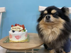 大田区トリミングサロン、ケーキとれお