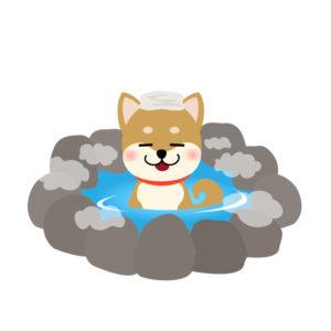 トリミングサロンPeachDog温浴