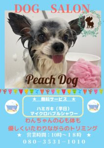 大田区蒲田トリミングサロンPeach Dog202003アクアポスター