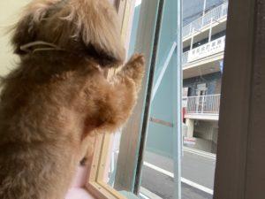 大田区トリミングサロンPeachDog,MIXココi