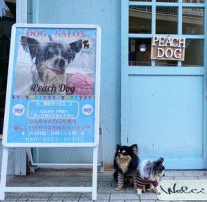 大田区蒲田トリミングサロンPeach Dog202003