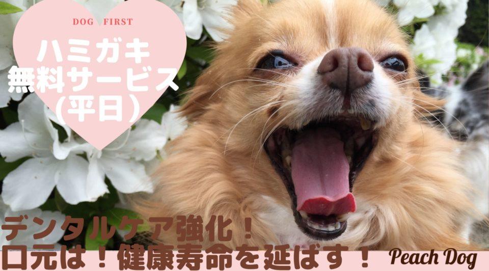 デンタルケア大田区蒲田トリミングサロンPeach Dog