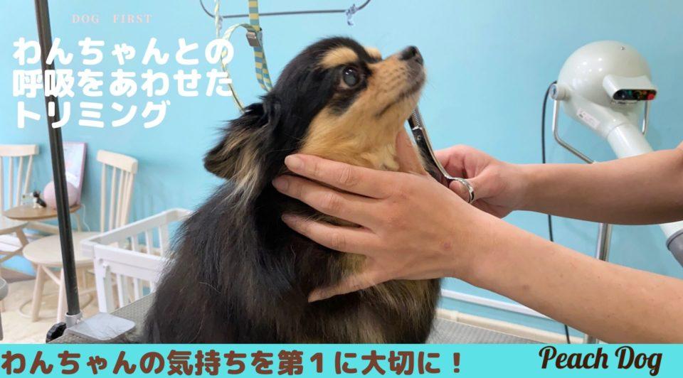 呼吸を合わせたトリミング大田区蒲田トリミングサロンPeach Dog