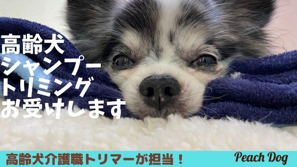 高齢犬トリミングシャンプーpeachdog