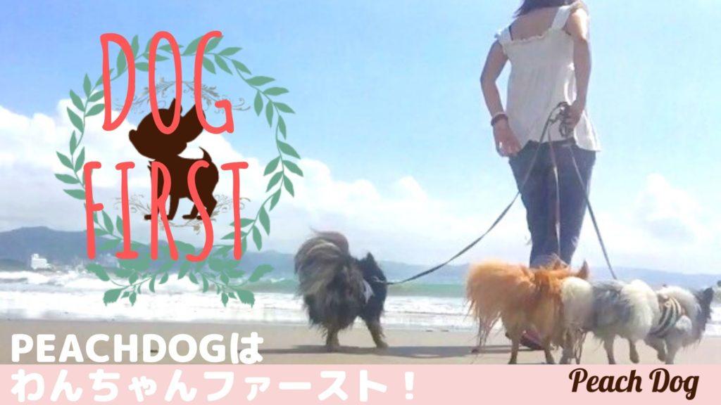 dog first大田区蒲田トリミングサロンPeach Dog