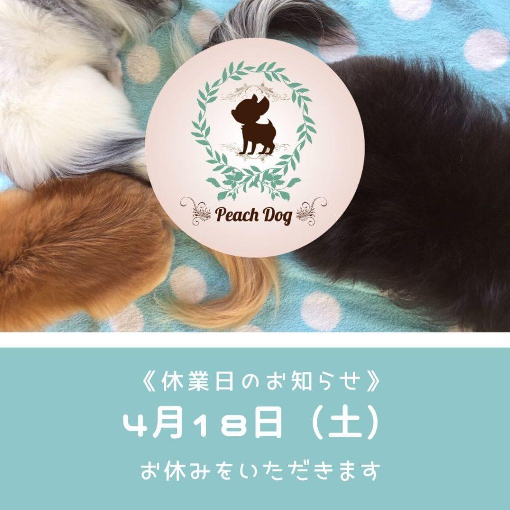 大田区蒲田トリミングサロンPeach Dog休業日のお知らせ200418