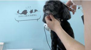 大田区トリミングサロン,MIX犬200603e