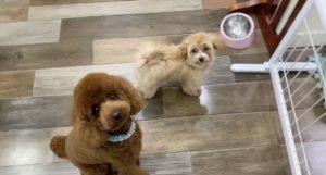 大田区トリミングサロン,MIX犬200522j