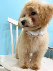 大田区トリミングサロン,MIX犬200522a