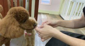大田区トリミングサロン,mix犬200721a