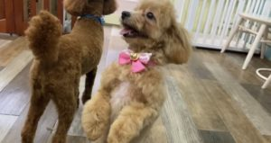 大田区トリミングサロン,mix犬200721