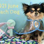 【2021年6月】お写真デザイン★大田区トリミングサロンPeach Dog